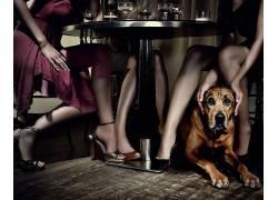 表,喝,狗,妇女,腿,木表面,动物,模型27728