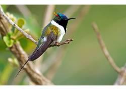 动物,鸟类,蜂鸟339413