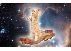 动物,猫,培根,空间,超现实主义213731