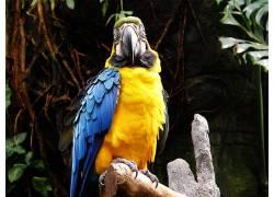 动物,鸟类,金刚鹦鹉,鹦鹉173311