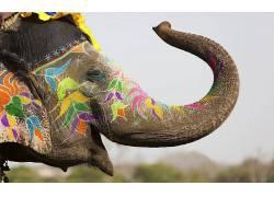 动物,象,人体彩绘,洒红节,印度,华美,景深,花卉,绘画,节日,饰,性