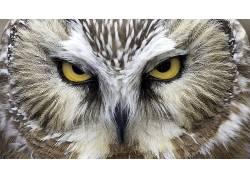 动物,猫头鹰,鸟类48886