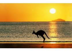 袋鼠,海滩,澳大利亚,太阳,天空,动物,红袋鼠31454