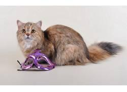 动物,猫,威尼斯面具,简单的背景276424