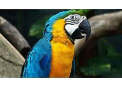 动物,鸟类,金刚鹦鹉110551