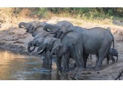 动物,象,小动物,水227317