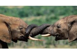 动物,象,小动物24322