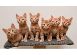动物,猫,小动物,坐在,白色背景161984