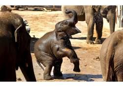 动物,象,小动物43296