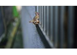 动物,猫,小动物,小猫,宠物,篱笆,壁,景深,头350058