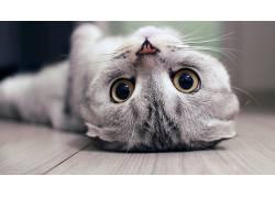 动物,猫,小动物,小猫,木表面,上下翻转,景深,宠物352967