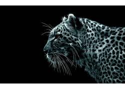 豹,豹(动物),数字艺术,动物,大猫166478