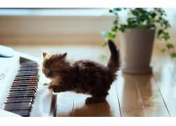 动物,猫,小猫,小动物,钢琴291352