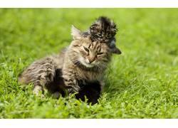 动物,猫,小猫,小动物205797