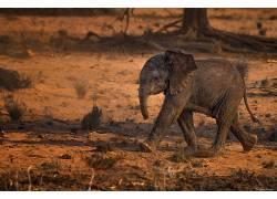 动物,象273893