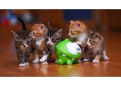 动物,猫,小猫,玩具,猫的,小动物179921