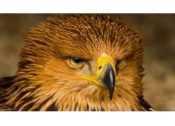 动物,鸟类,鹰286525
