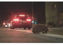动物,猬,城市的339322