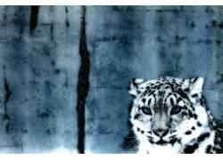 豹,雪,动物22817