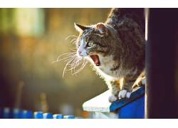 动物,猫,打哈欠198519