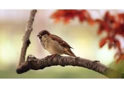 动物,鸟类,麻雀136633