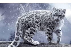 豹,雪豹,动物,性质,雪,冬季,猫,猫的,木,树木,松树,山,植物,大猫,