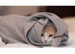 动物,猫,摄影,面对180398