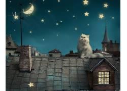 动物,猫,明星,月亮,新月,屋,屋顶,数字艺术,波斯猫235382