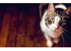 动物,猫,景深,木表面180381