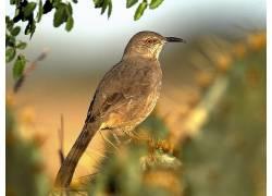 动物,鸟类173283