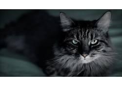 动物,猫,景深2661