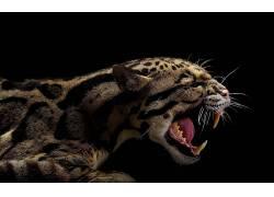 豹猫,动物24731
