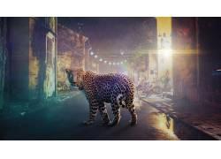 豹(动物),数字艺术79732