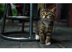 动物,猫,椅子,小猫255263