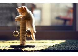 动物,猫,模糊,地毯,本托罗德,阳光,玩具109310