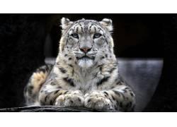 动物,豹(动物)191192
