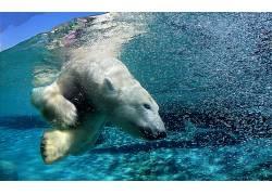 北极熊,动物,水,拆分视图,性质5677