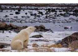 北极熊,动物,河95453