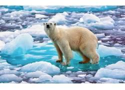 北极熊,动物,熊,冰,性质3922