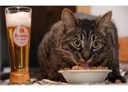 动物,餐饮,啤酒,猫,宠物,吃348364