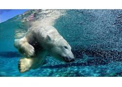 北极熊,动物,野生动物280532