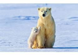 北极熊,动物,雪,冰,小动物5678