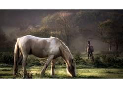 动物,马,性质22266