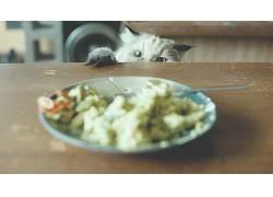 动物,猫,餐饮286278