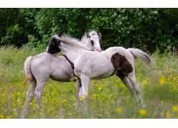 动物,马,花卉,小动物136493
