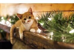 动物,猫,饰,圣诞饰品284702