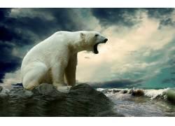 北极熊,动物4080