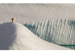 北极熊,北极,动物,雪,冰,沙丘96156
