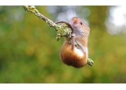 动物,老鼠,宏,科,哺乳动物101669