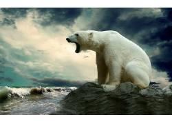 北极熊,性质,动物147111
